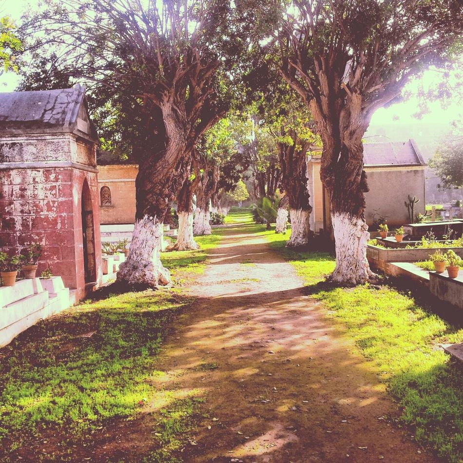 The optimistic part in a cemetry! Cemeterybeauty Optimism Nature_perfection