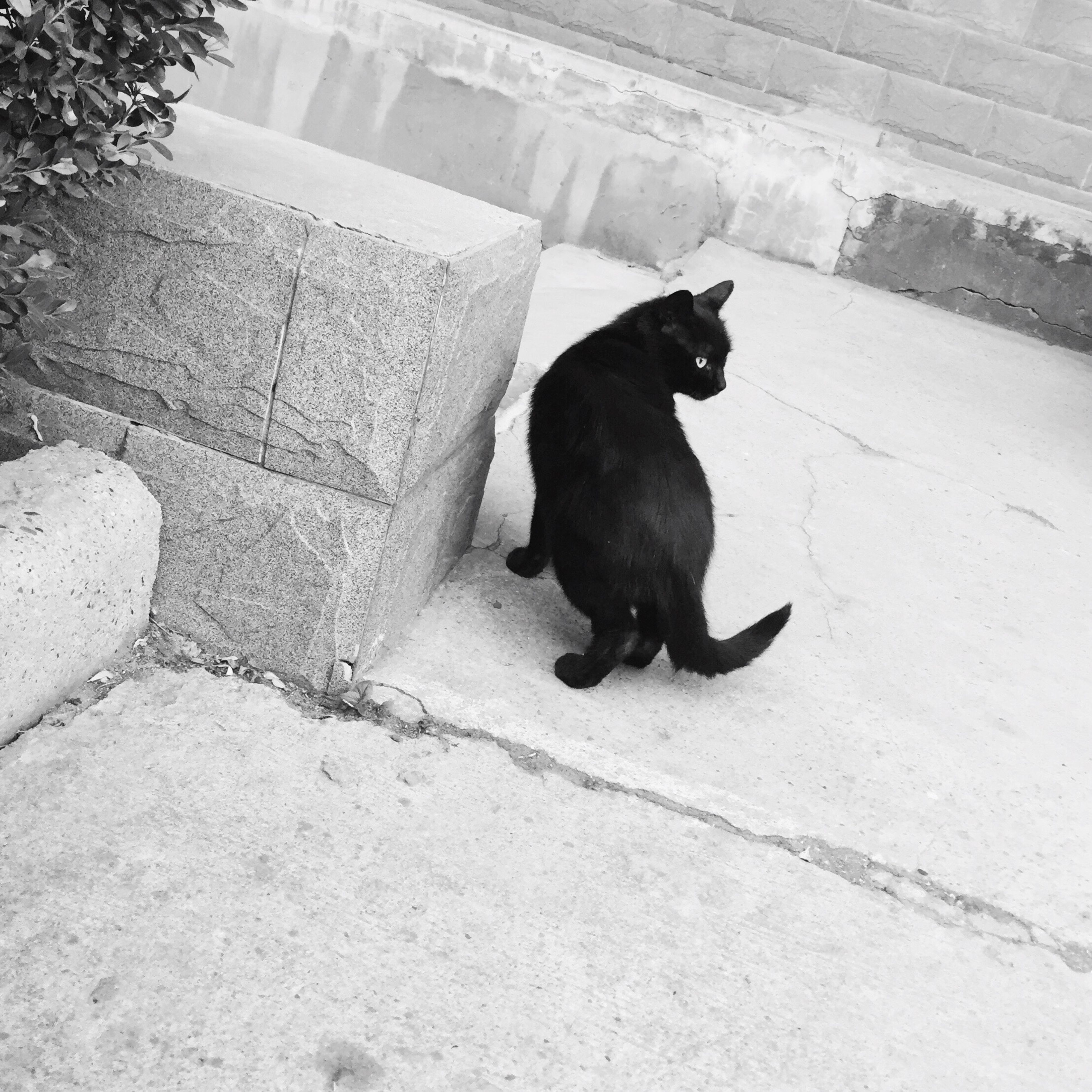 animal themes, one animal, domestic animals, pets, mammal, black color, domestic cat, cat, dog, high angle view, full length, feline, sitting, zoology, relaxation, no people, looking at camera, black, outdoors, vertebrate