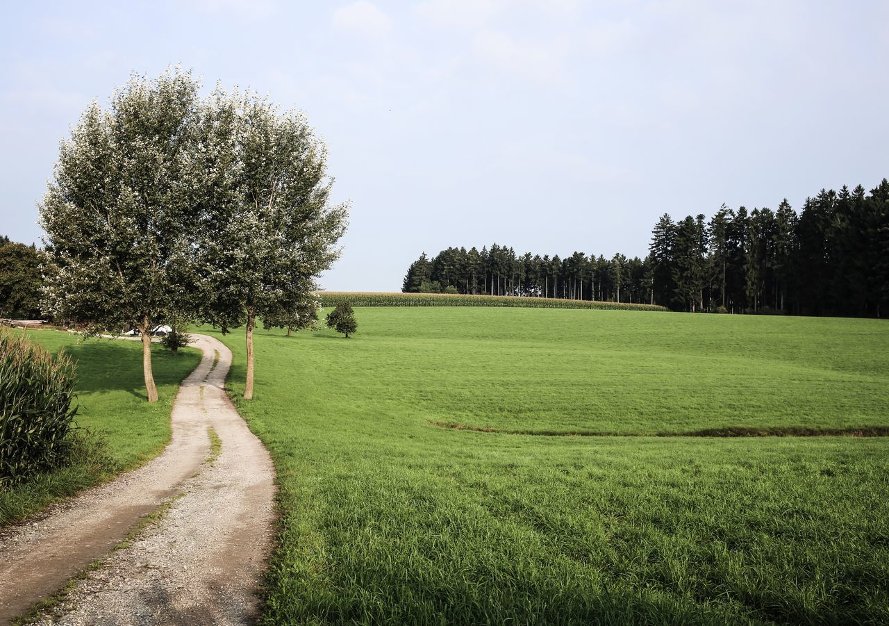 Beautiful stock photos of baum, Beauty In Nature, Day, Field, Germany