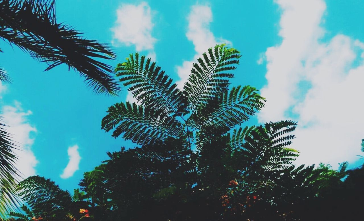 tree, sky, growth, no people, low angle view, day, nature, outdoors, beauty in nature, close-up, palm tree