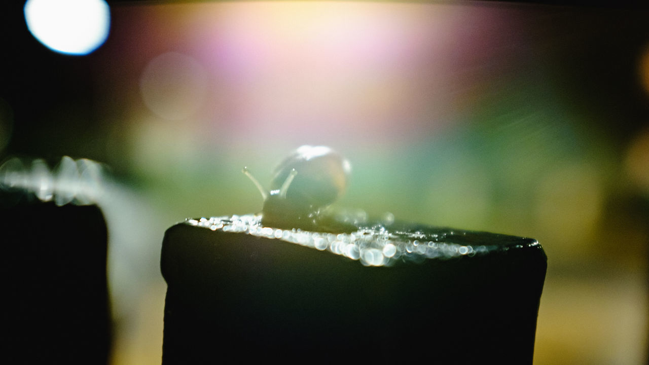 close-up, focus on foreground, ice, no people, drop, drink, cold temperature, indoors, freshness, water, nature, dripping, day