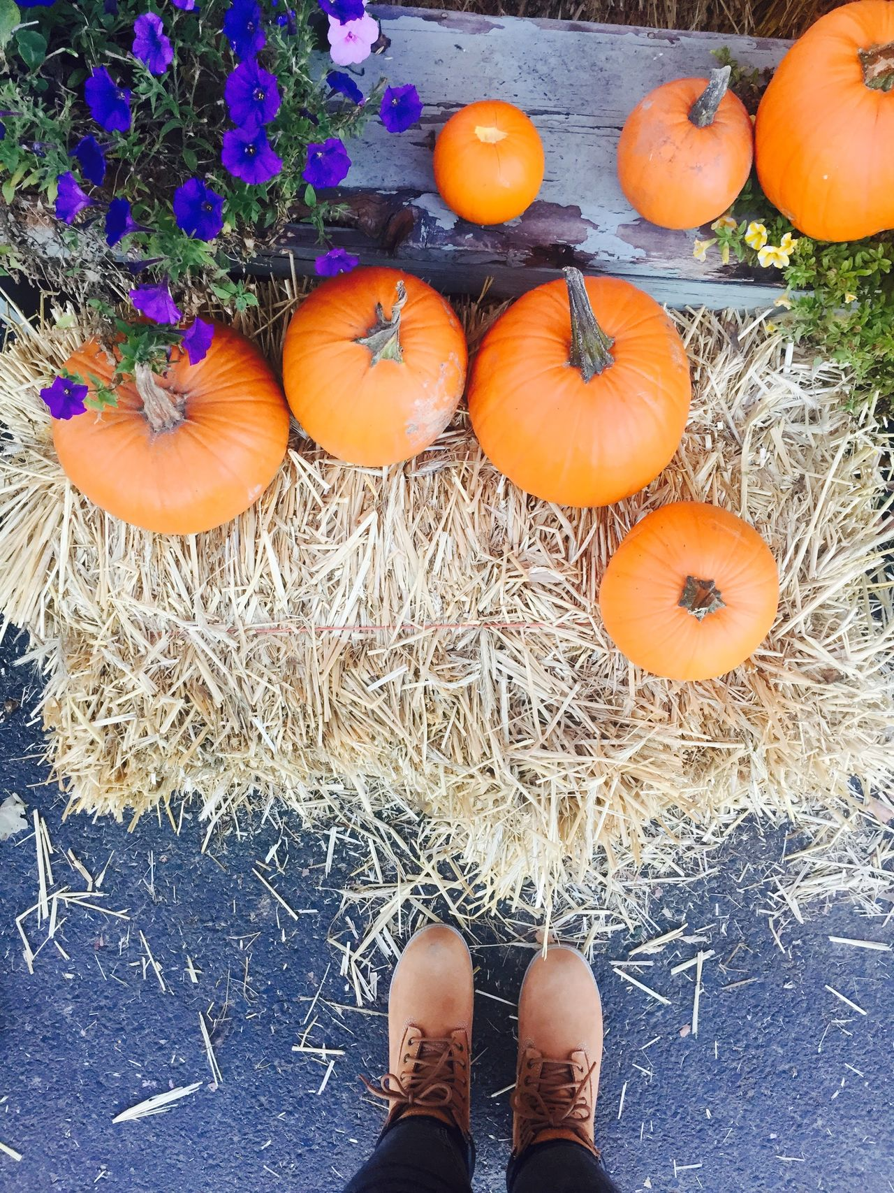 Adult Adults Only Autumn Day Fall Freshness Haystack High Angle View Human Body Part Leaves Low Section One Person Outdoors Pumpkin Pumpkin Patch Real People Shoe