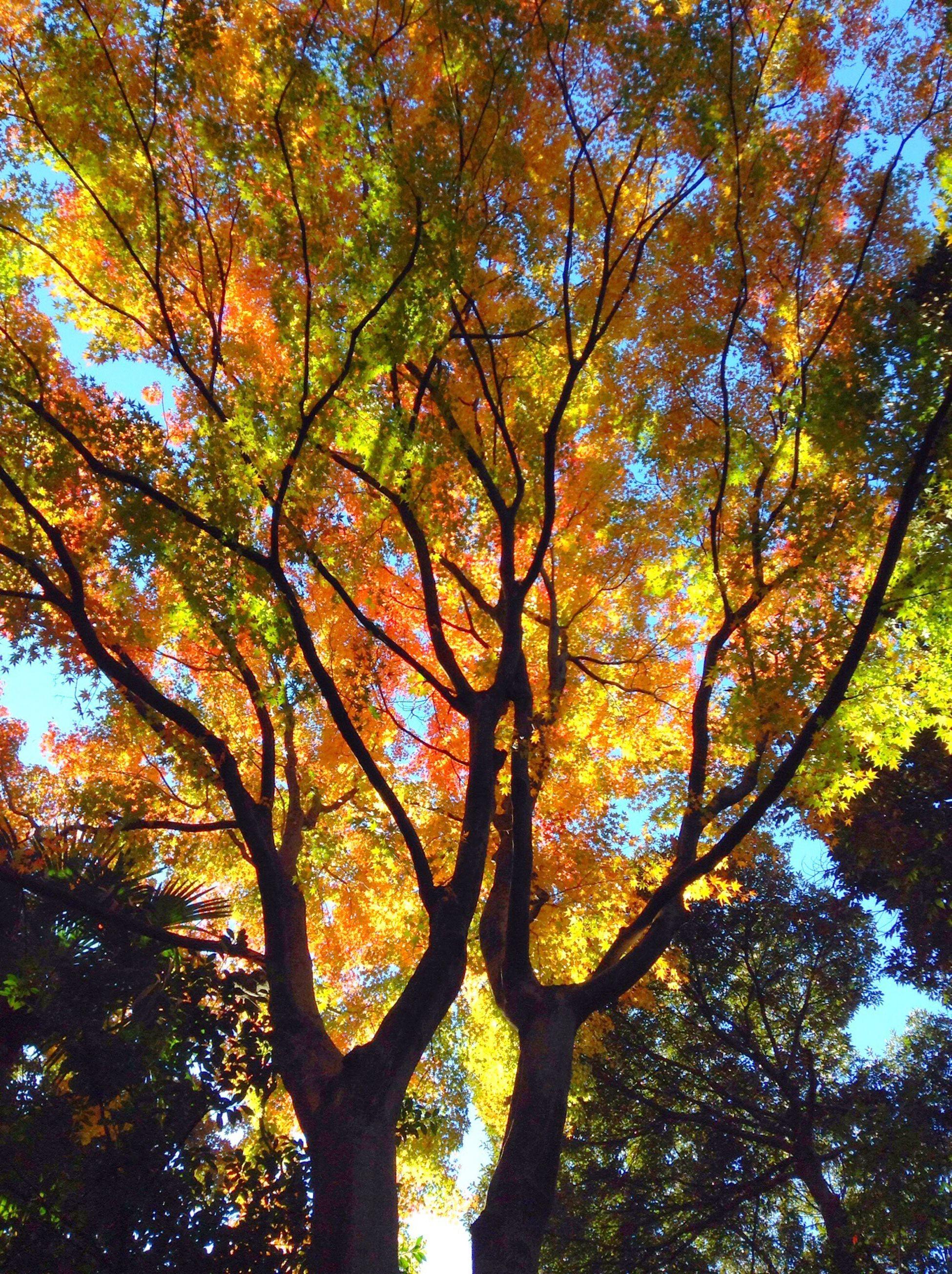 Trees TreePorn Autumn Autumn Colors Relaxing shirokanedai Tokyo Japan (屮゚∀゚)屮