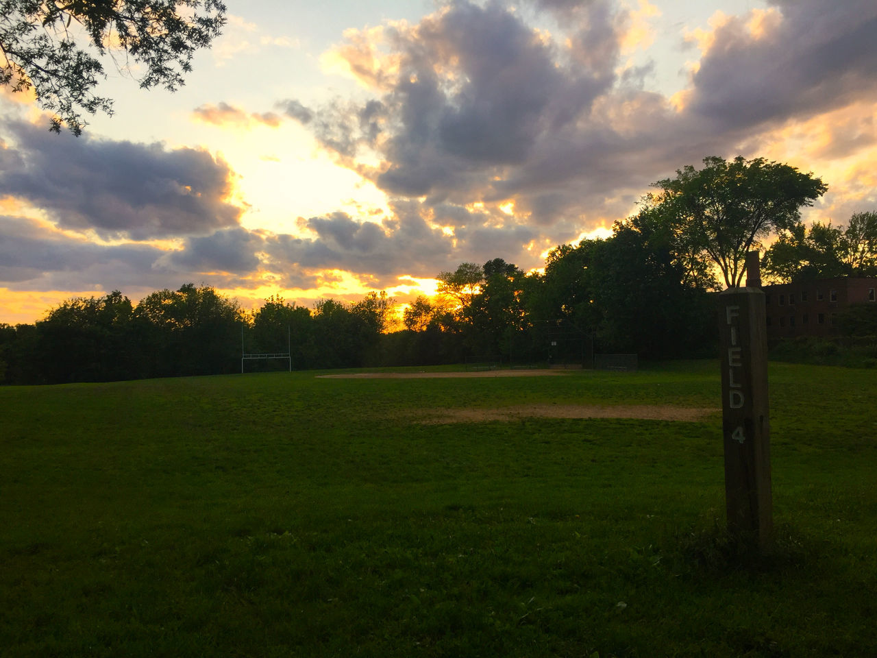 tree, grass, beauty in nature, nature, sunset, tranquility, tranquil scene, scenics, no people, cloud - sky, sky, field, sport, outdoors, growth, soccer, soccer field, day