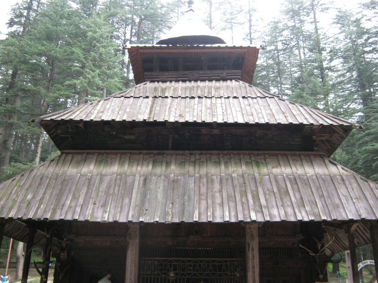 tree, built structure, day, architecture, roof, wood - material, no people, thatched roof, building exterior, outdoors, nature, close-up