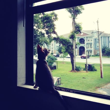 Pets Thunderstorm Power Lines Power Outage #GSU