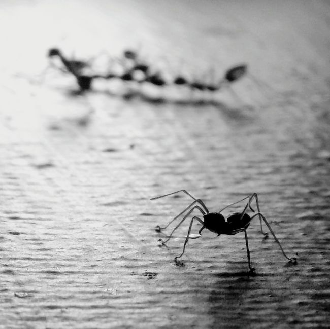 Ants doesn't sleep Q Ants Minimalism Minimal Minimalist Minimalobsession Vscocam VSCO EyeEm Gallery Light And Shadow Photography EyeEm Best Shots - Black + White EyeEm Best Shots EyeEm Bnw EyeEm Silhouette Bnw_collection Blackandwhite Black And White Bw_collection Bw_friday_challenge Monochrome Story EyeEm Nature Lover Motoxplay