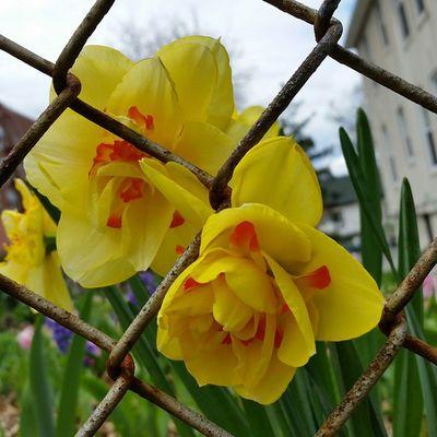 Prison break on Sedgwick Ave. Bronx Bx BronxBestShots News12Bx NewsOnThe2s EverydayBronx Welcometothebronx Welcome2TheBronx TheBronxDoesItBetter EyesOnTheBronx ProjectBronx InTheBRONX HappeningInTheBronx Bx200 BxIgers Nycprimeshot IGS_NYC Ig_addicts Rustlord_communitythrive Icapturemobile GalaxyS5 Gs5 TheBronxIsBeautiful Pure_Photos_Season