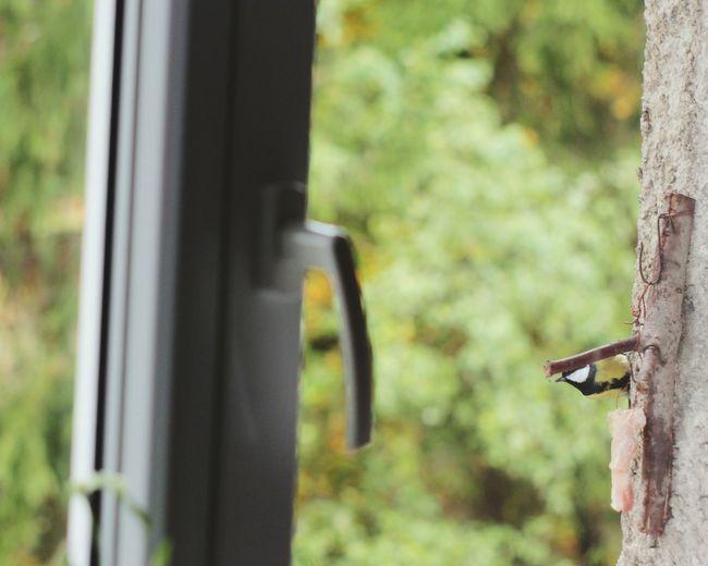 Tomtit Birds BirdLovers Nature Autumn Wild Animal Animals Candid Outdoors