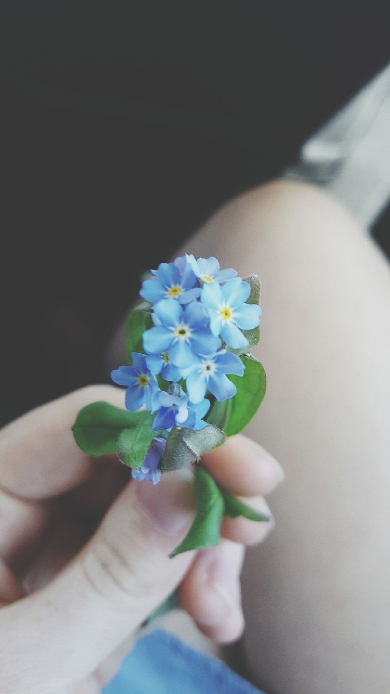 Human Hand Human Body Part Holding Flower Hand Flower Head Day Freshness Nature Blue Blue Flowers Blue Flower Simple Nature Country Life! Simple Moments Simple Pleasures Simple Things Simple Photography