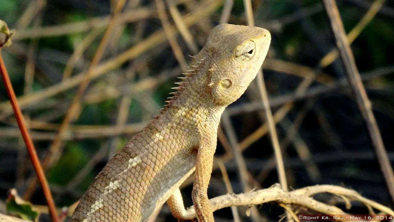 Attitude .. One Animal Animals In The Wild Animal Wildlife Outdoors Close-up Iguana Reptile Nature No People Followme Travel