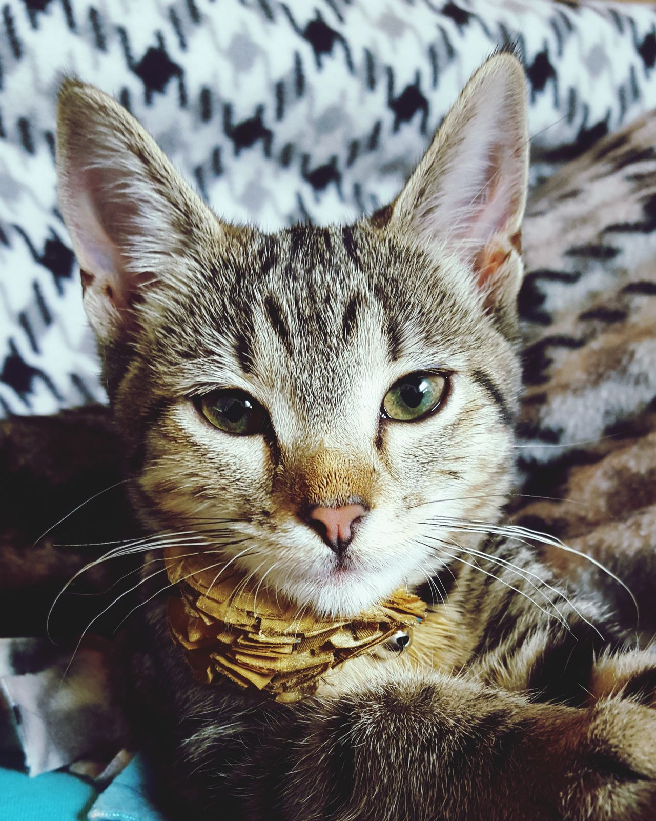 Cat Feline Kitten Domestic Cat Looking At Camera Domestic Animals One Animal Leisure Animal Themes Whisker Close-up Indoors  Meow Pets Portrait Catlady Lounging Lifestyles No People Indoors  Mammal Relaxation The Portraitist - 2017 EyeEm Awards
