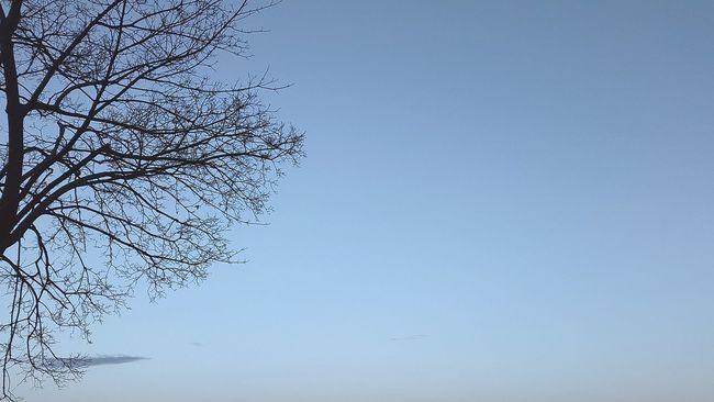 Alb : Alba Albeggiare Albeggiando Albero Alberello