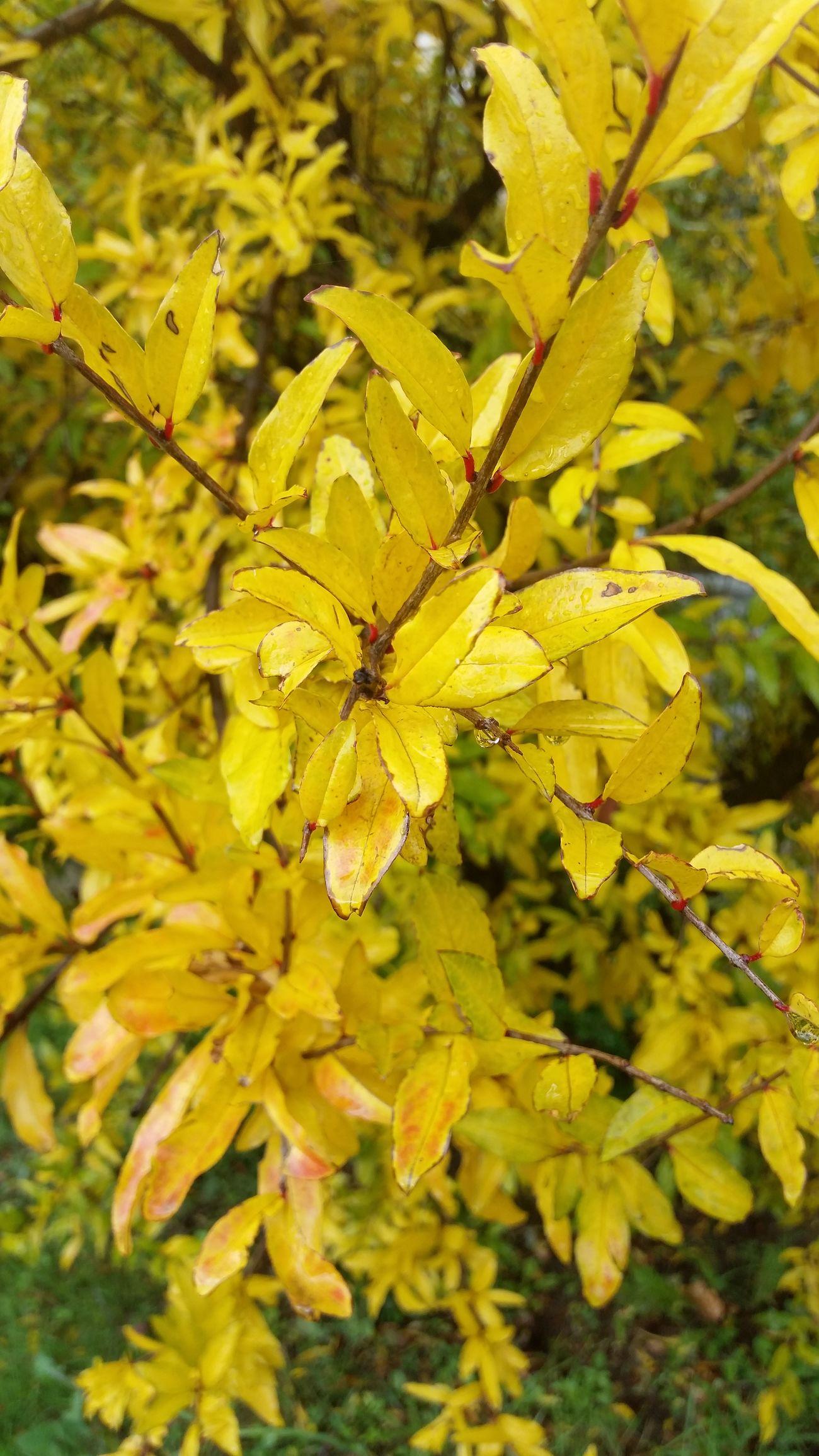 Color Explosion Flowers,Plants & Garden Macro Photography Colorsplash