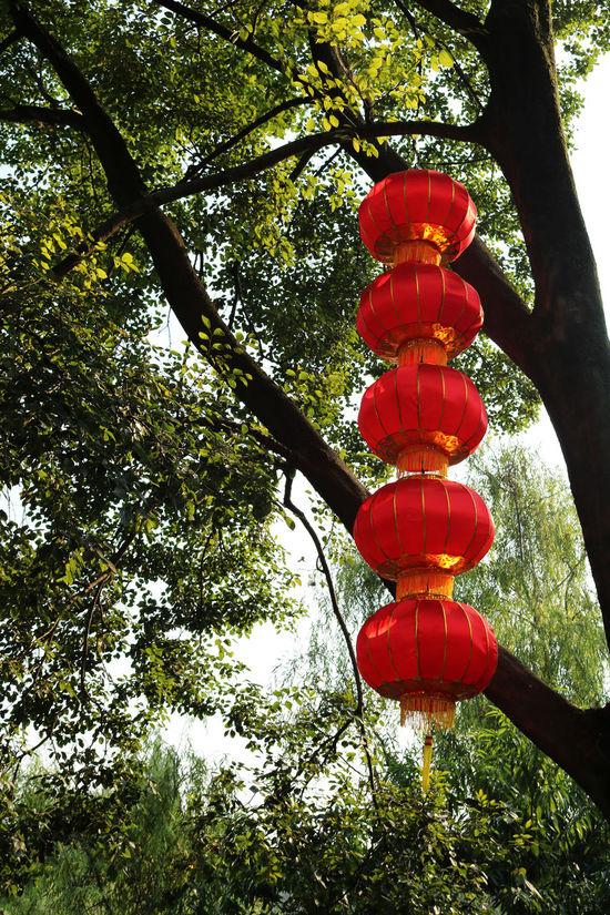 Chinese Art Chinese Lanterns Hanging Lanterns Lantern