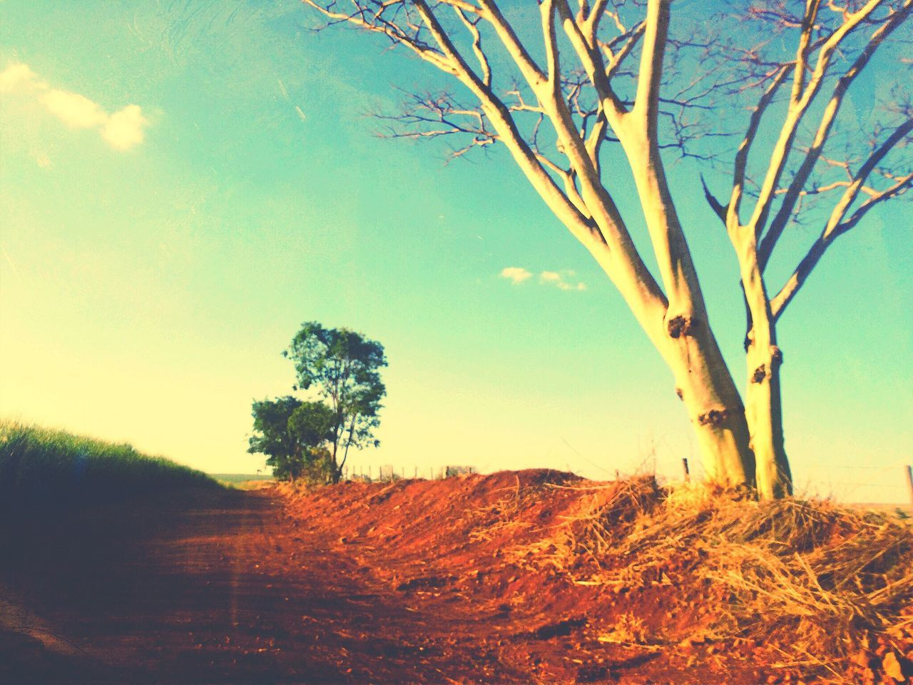 landscape, nature, tree, tranquility, scenics, no people, beauty in nature, sky, outdoors, day