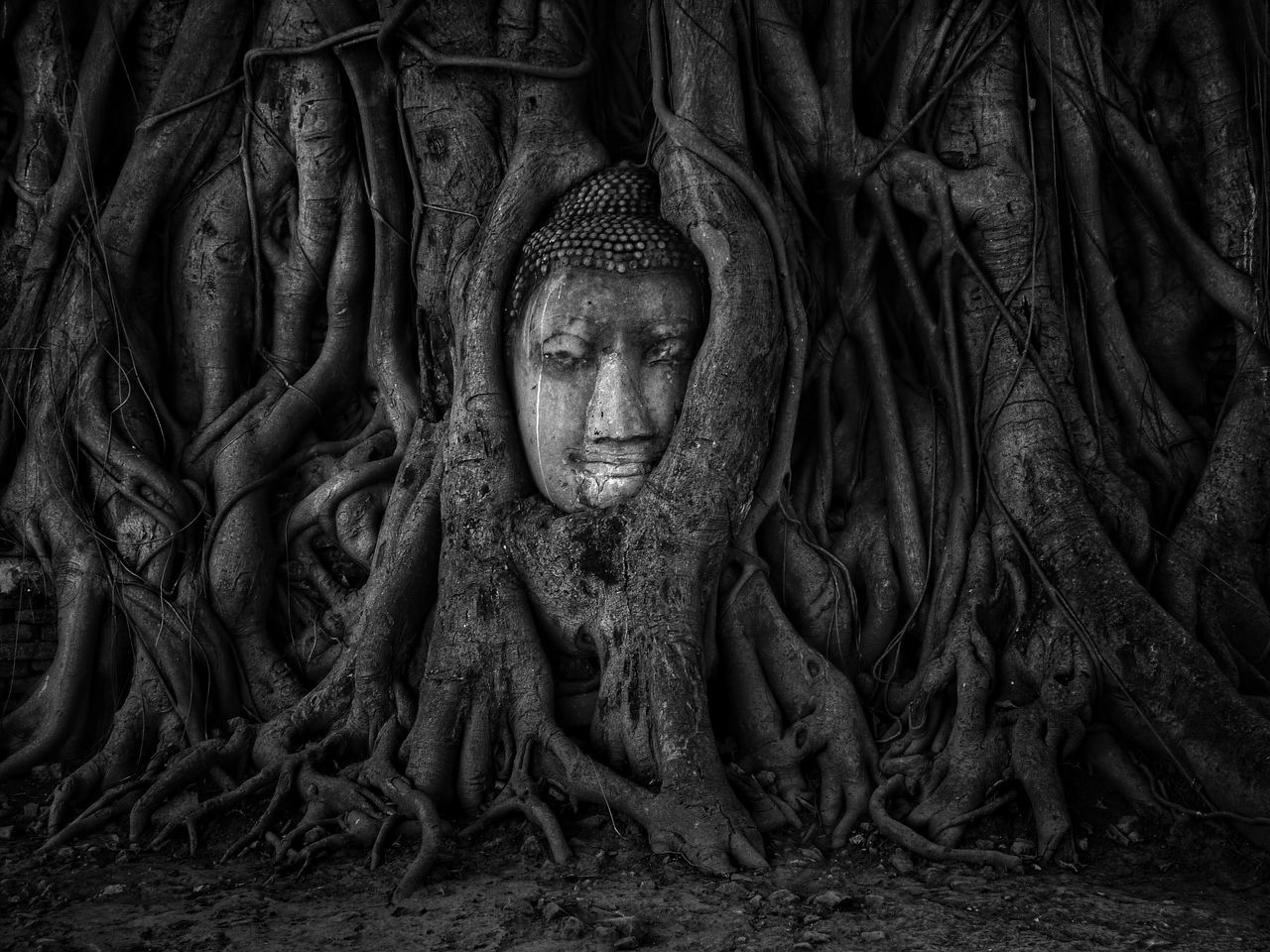 Black And White Art Buddha Buddha Statue Buddhism Unseen_Thailand Thailand Travel Tree Archaeological Sites Historic Ancient Face Nature Light And Shadow Trunk Tree Wonderful Old Vintage