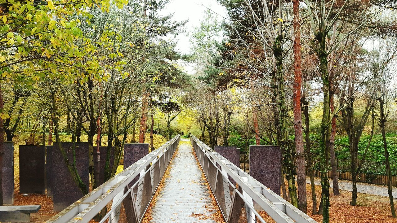 tree, the way forward, railing, wood - material, footbridge, growth, day, outdoors, bridge - man made structure, nature, forest, beauty in nature, tranquil scene, tranquility, no people, green color, built structure, wood paneling, scenics, branch, sky