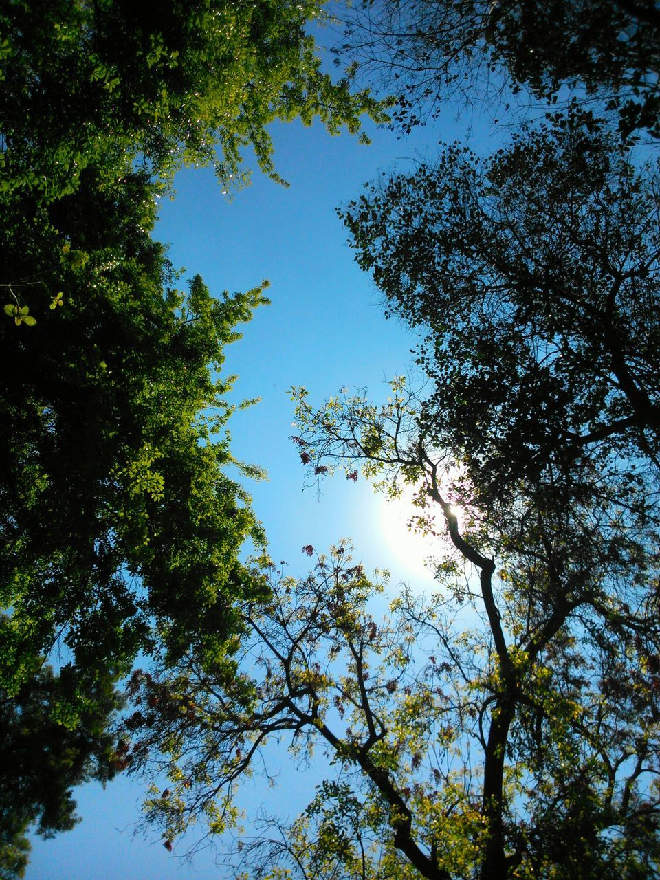 tree, nature, blue sky, forest, growth, low angle view, sunshine, hope, beauty in nature, height, clear sky, branch, day, no people, high, outdoors, sky