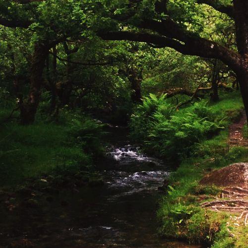 River to burrator Nature Beautiful Weather Walking