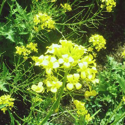 Flowers Yellow Flower Summer