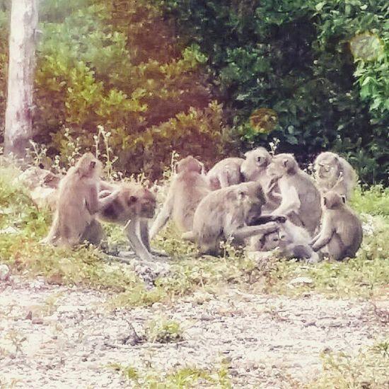 Family matters. Baluran Balurannationalpark Monkey Wildlife animal jawatimur java indonesia travel