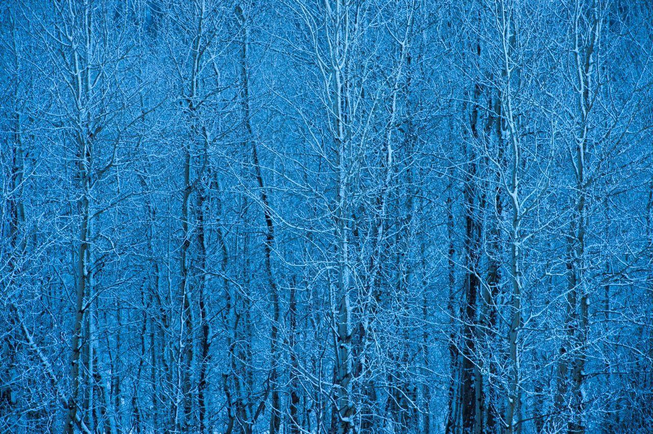 Crisp winter trees in Wyoming Beautiful Nature Wyoming Snow Cold Seasons