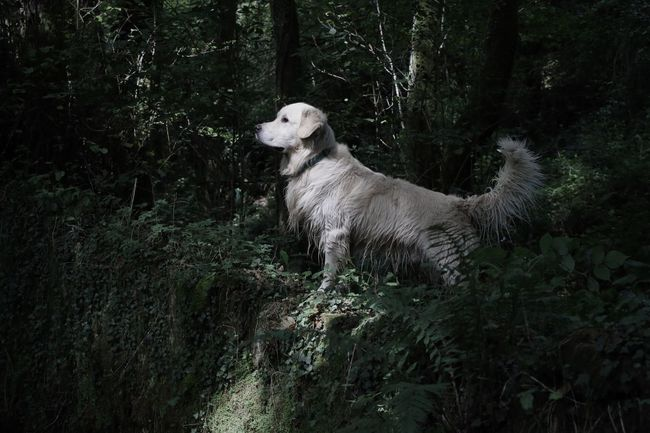 I am the king! Ghiro My Dog Is A Model  Nature Getting Creative Golden Retriever Untold Stories Dog Canon EyeEm Dogs
