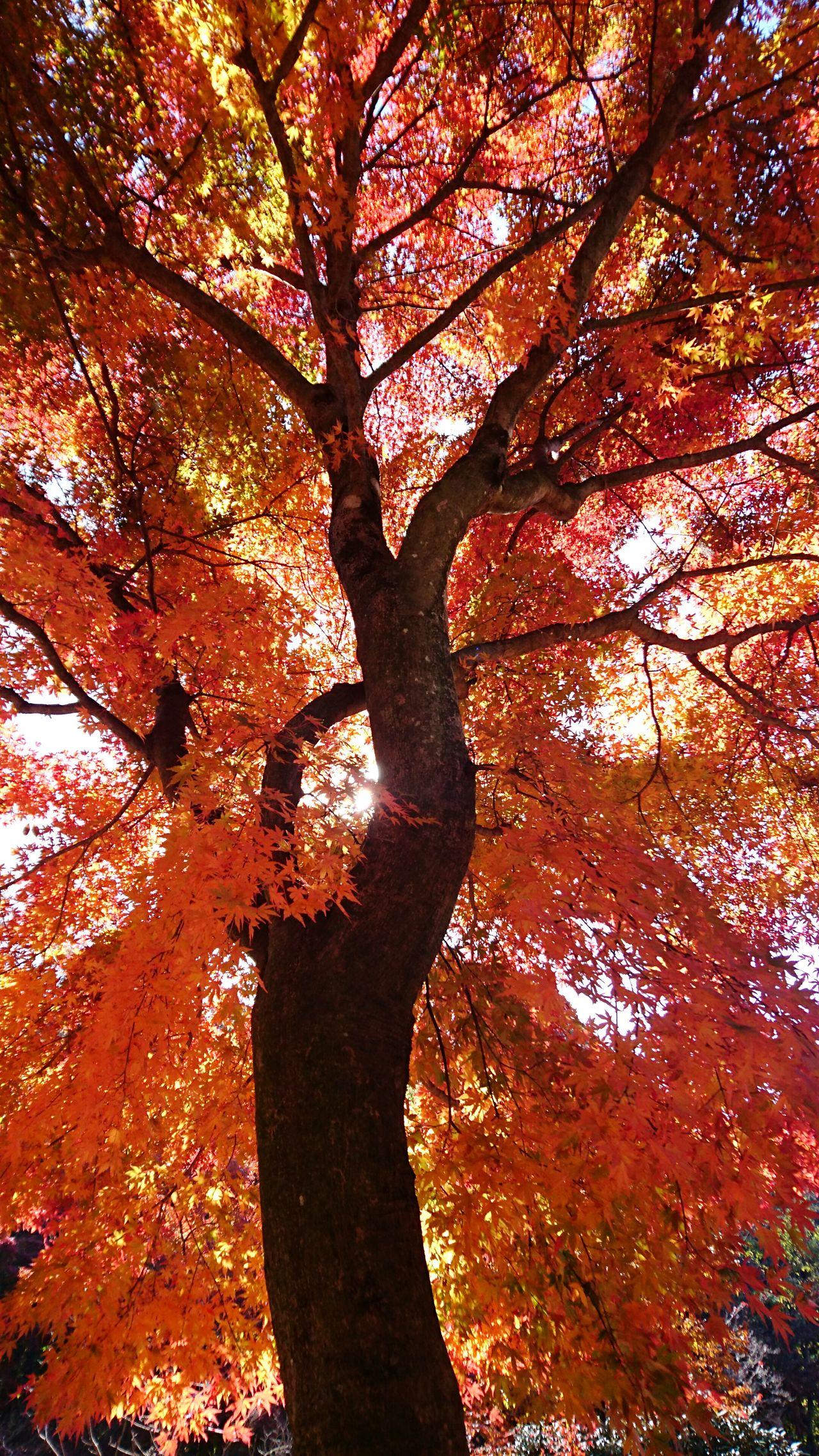 紅葉狩り11/13 もみじ もみじ狩り 紅葉 紅葉狩り Landscape Autumn Autumn Leaves