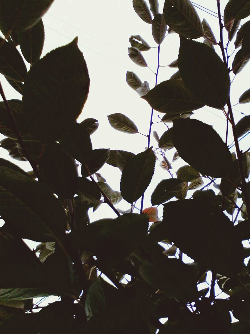 leaf, nature, no people, tree, growth, low angle view, branch, outdoors, day, beauty in nature, close-up, sky