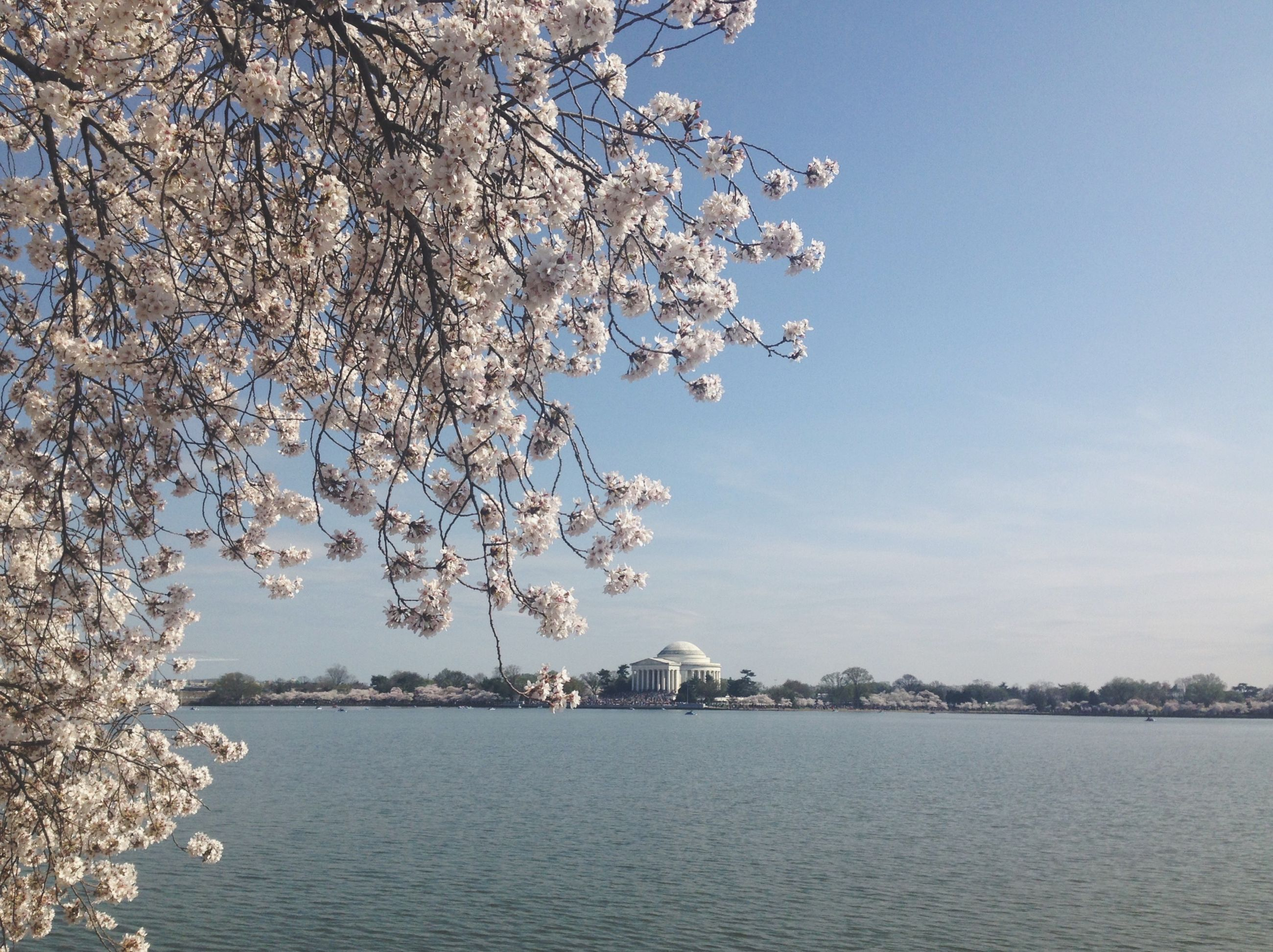 tree, water, branch, clear sky, waterfront, lake, flower, nature, beauty in nature, building exterior, built structure, growth, tranquility, architecture, sky, tranquil scene, river, scenics, blue, day