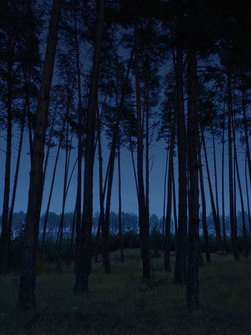 Twilight forest Eveningforest