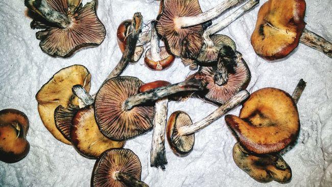 a present i got. Shrooms Shroomin' Mushrooms Shroomery Magical Mystical High Life