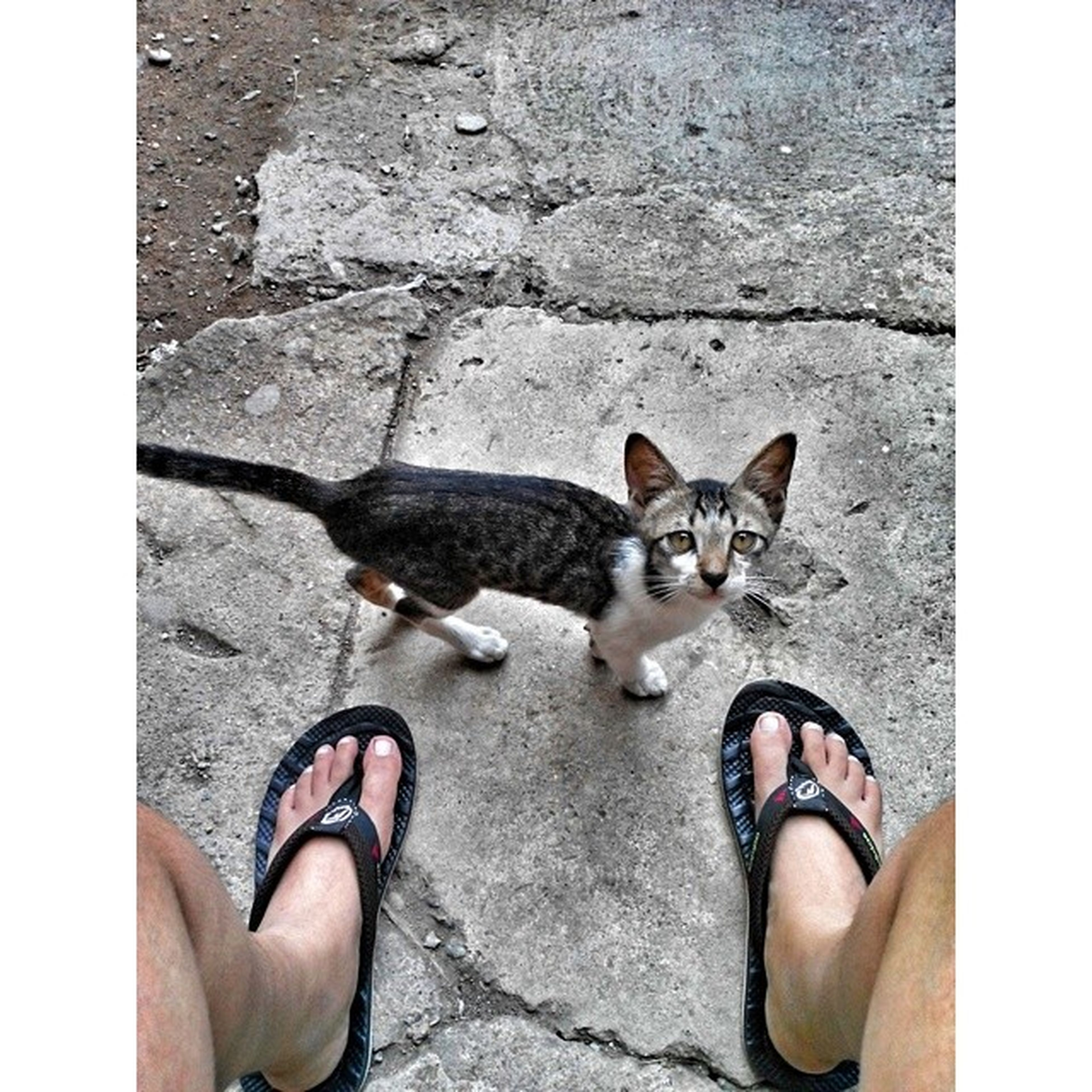 pets, domestic animals, animal themes, one animal, domestic cat, mammal, low section, high angle view, person, cat, street, shoe, personal perspective, auto post production filter, feline, transfer print, cobblestone