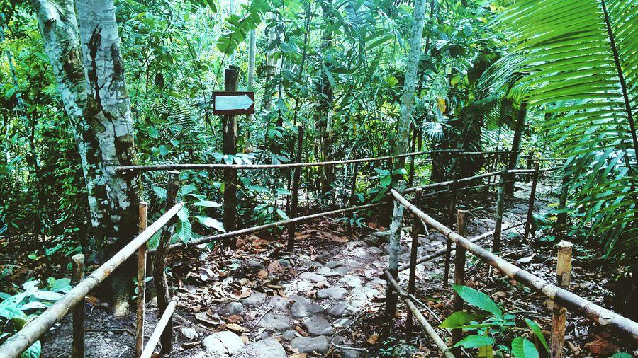 Zoo ?????? Enjoying Life Traveling Travel Jungle Peru Walk This Way