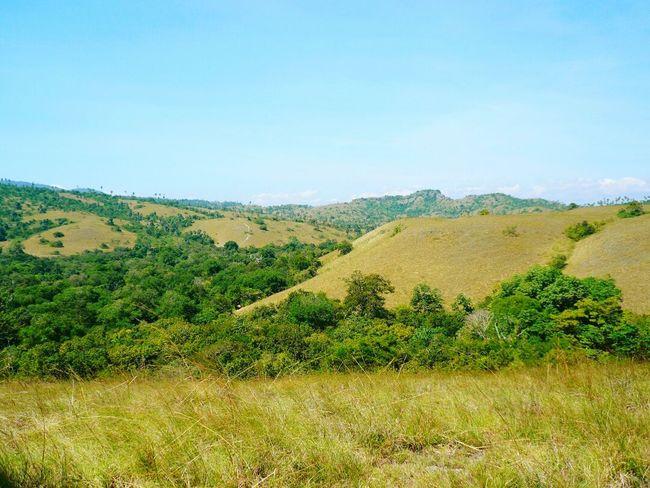 Tanah Airku Indonesia ❤ Day Nature Outdoors No People Growth Field Tree Sky Rural Scene Scenics Beauty In Nature Landscape Rincaisland Rinca Island Komodo National Park Komodo