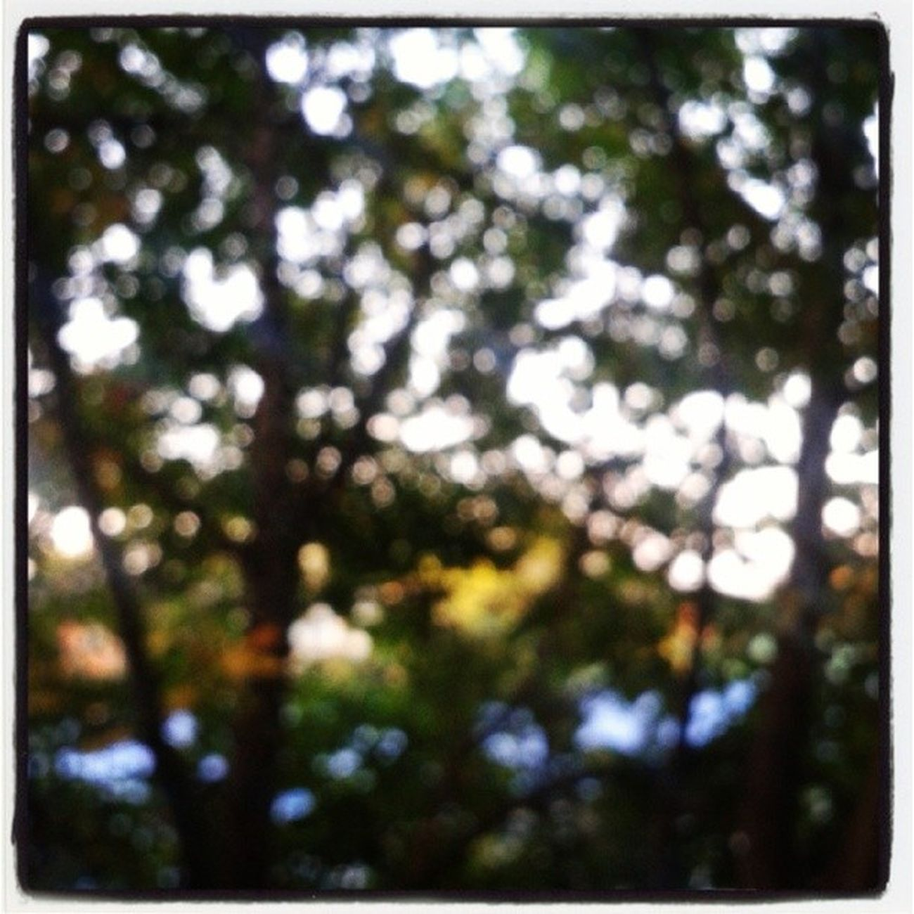 Bokeh. Photography Photo Photos Pic pics TagsForLikes picture pictures snapshot art beautiful instagood picoftheday photooftheday color all_shots exposure composition focus capture moment sun sunset lights