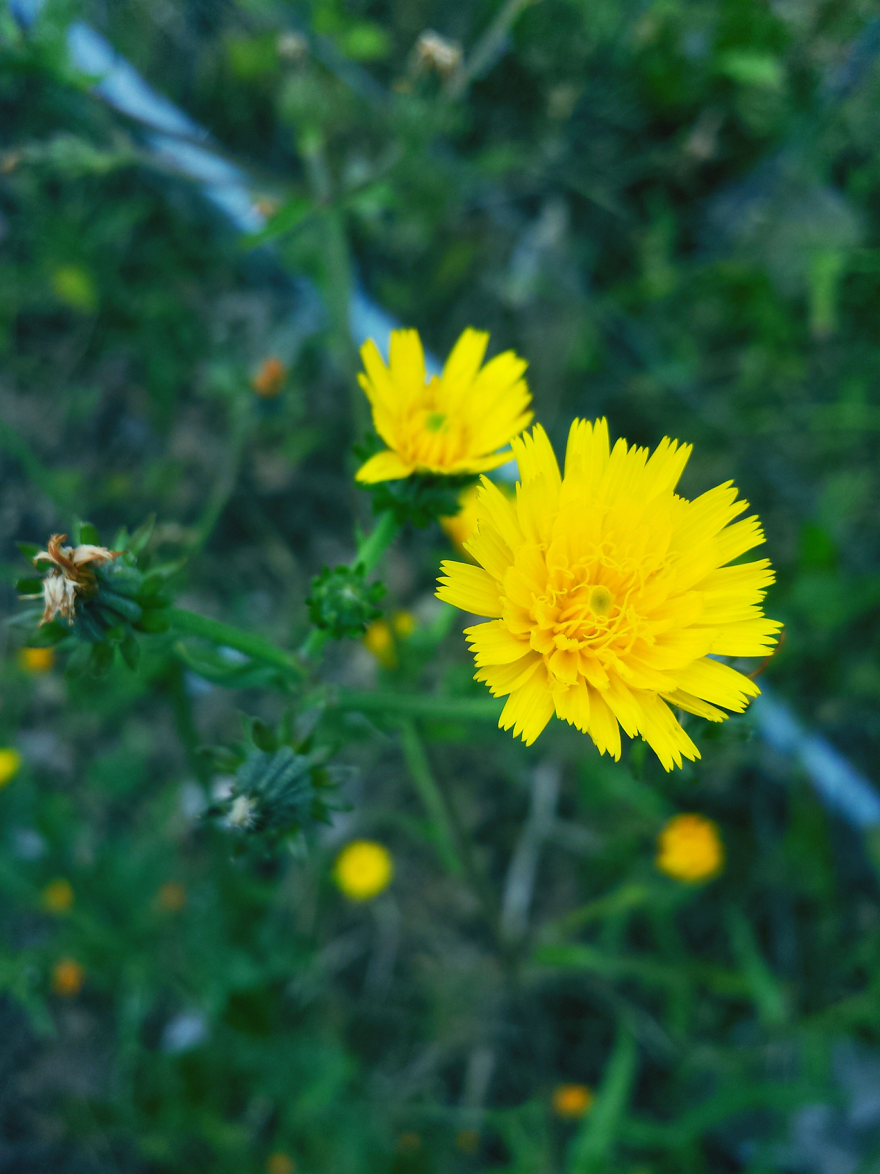 flower, yellow, nature, fragility, petal, beauty in nature, growth, outdoors, plant, flower head, freshness, no people, day, insect, close-up, bee, blooming, animal themes