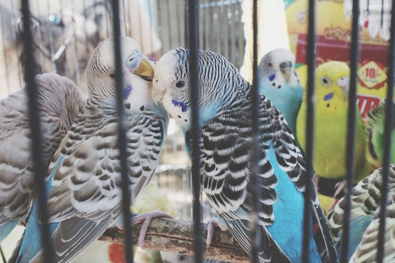 Animal Themes Cage Bird Close-up Animals In Captivity Birdcage Animals In The Wild No People Metal Indoors6 Nature Beauty In Nature EyeEmNewHere EyeEm