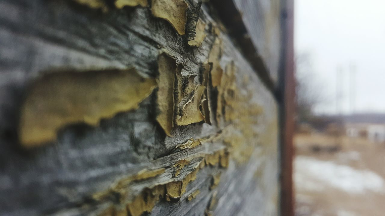 close-up, no people, selective focus, focus on foreground, textured, wood - material, day, outdoors