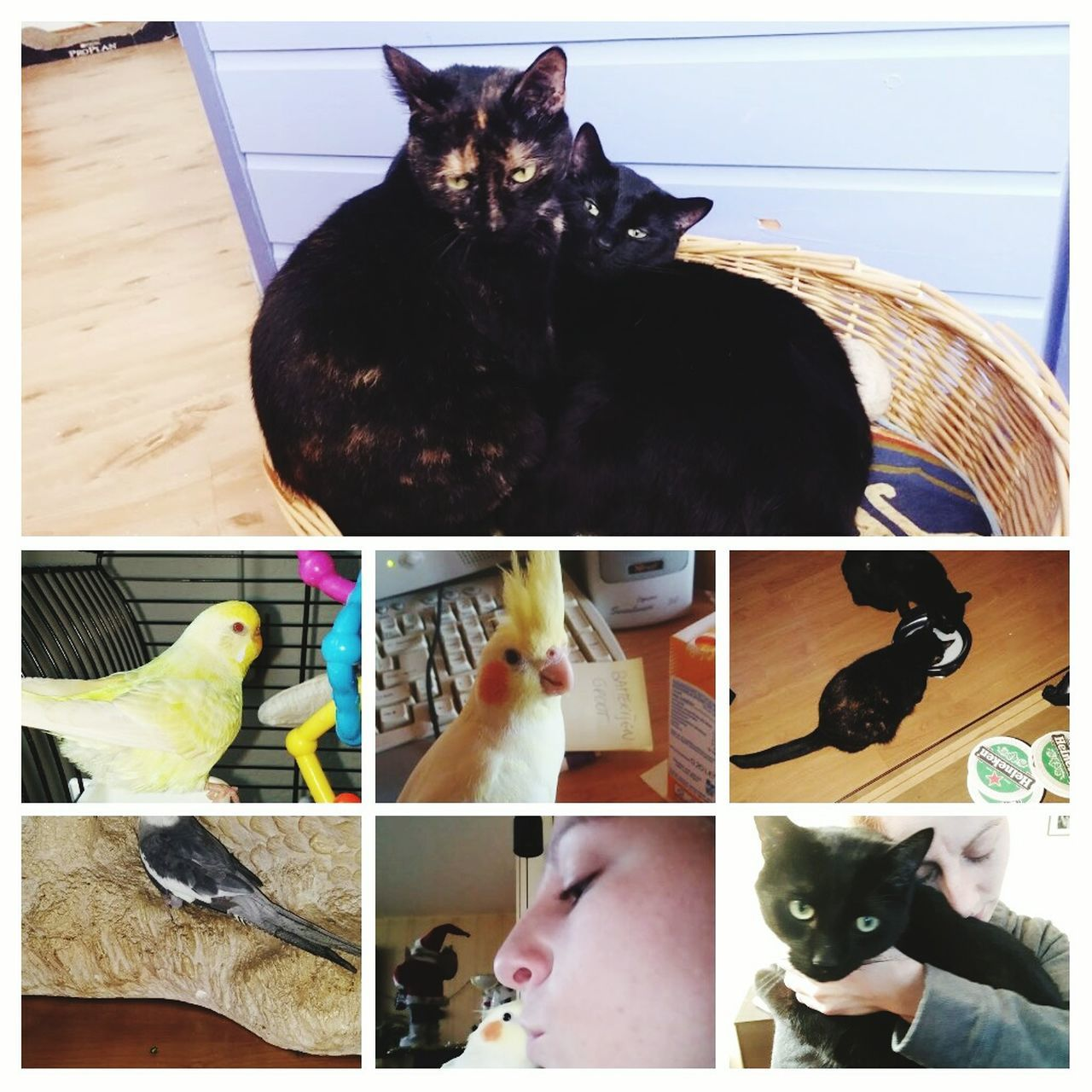 EyeEmNewHere Animal Themes Indoors  Birds Cats I Love My Animals! Best Friends ❤ Sweet♡ Lovely Pets