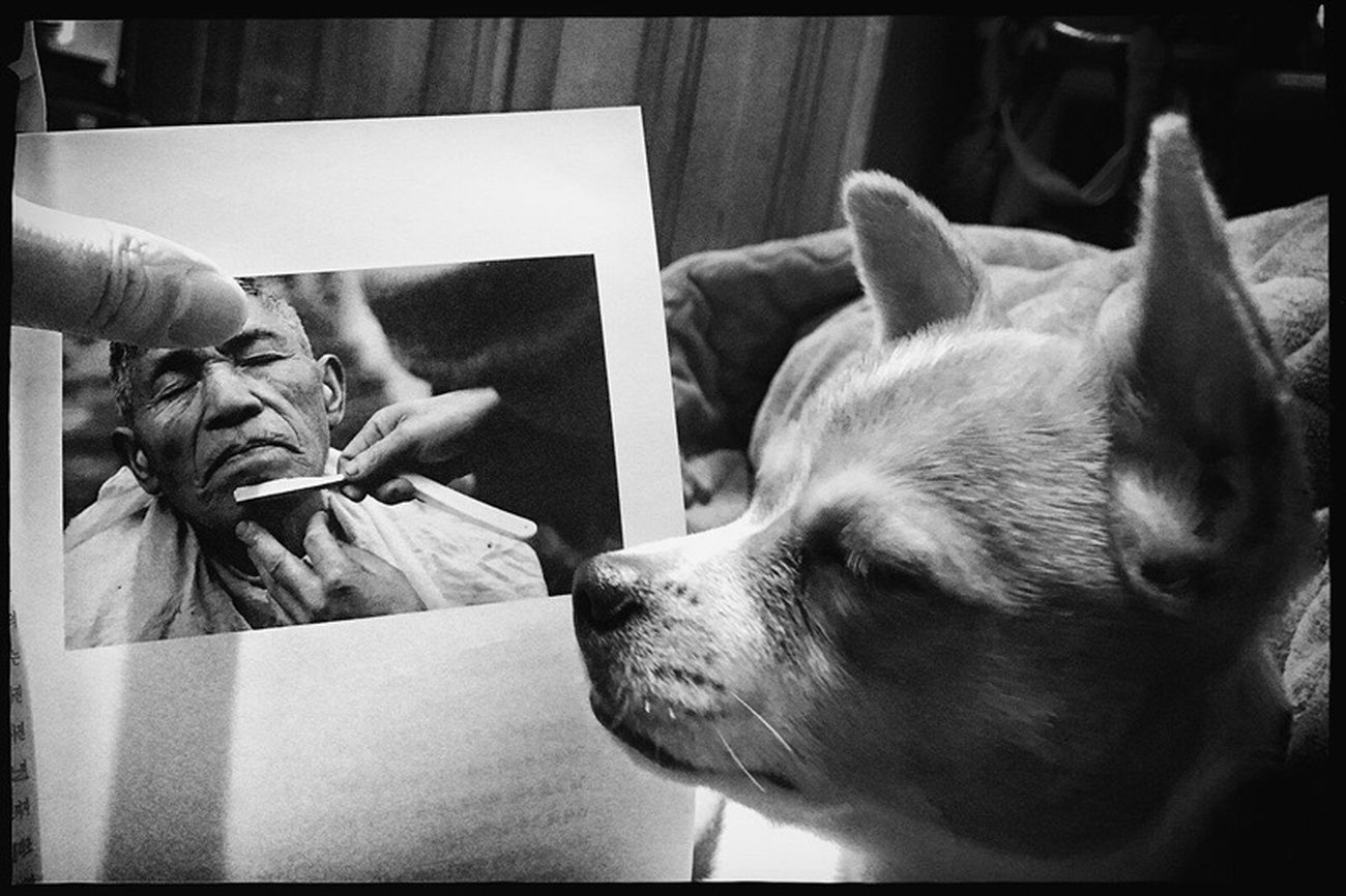 Shavingtime Sleeping Dog Photo Book Blackandwhite Photography Candid Photography Moments