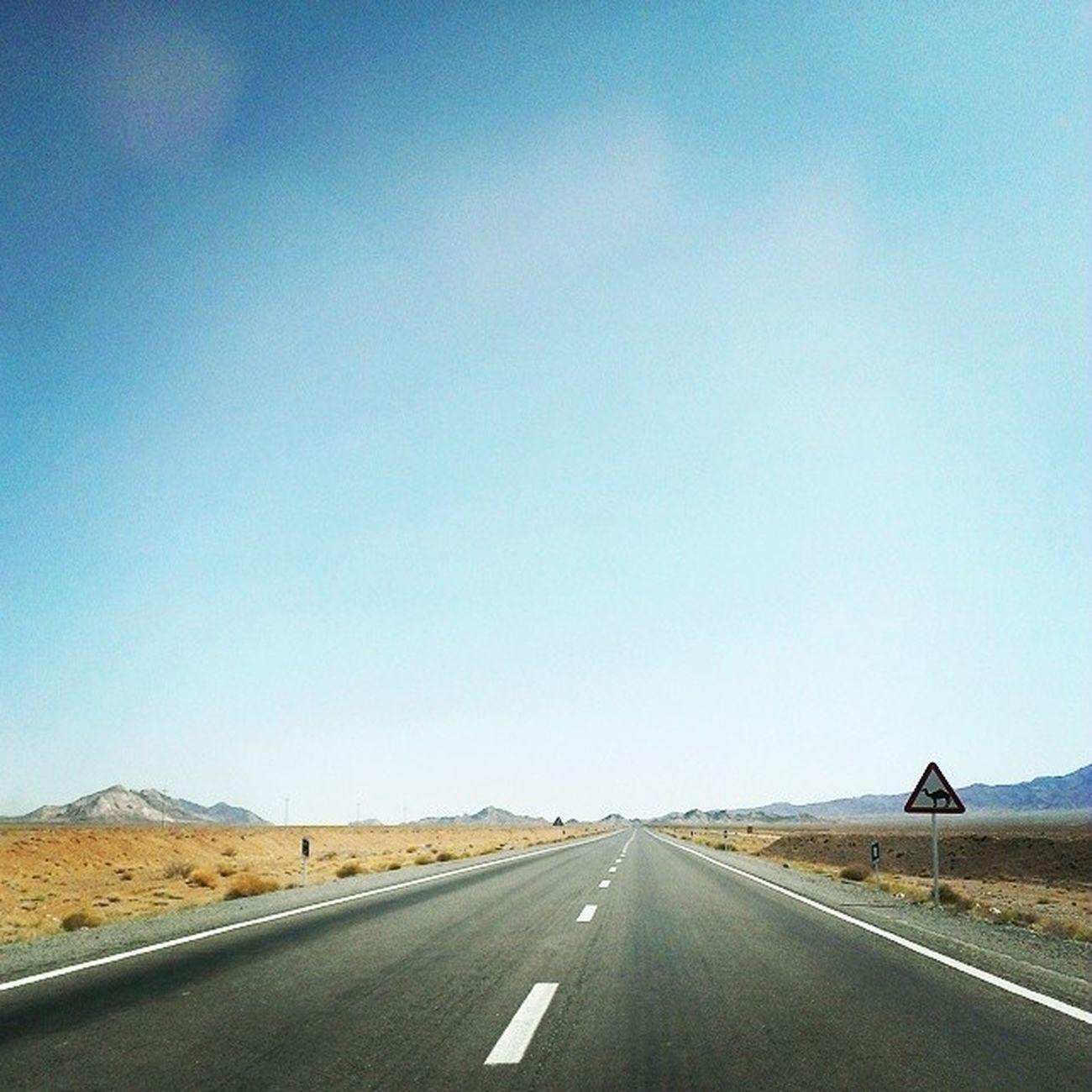 تنها در جاده طبس - محل عبور شتر