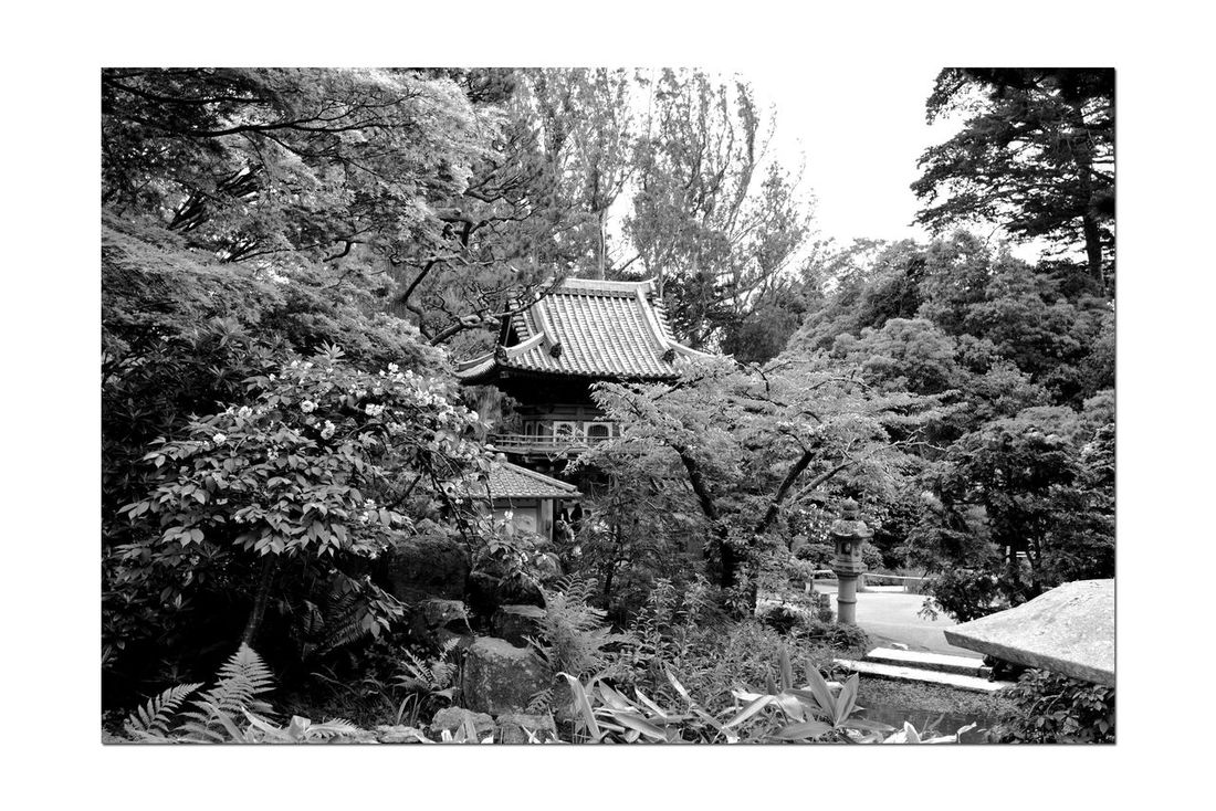 Japanese Tea Garden _ Monochromatic 1 Golden Gate Park San Francisco, Ca. The Oldest Public Japanese Tea Garden In U.S. Built In 1894 For World's Fair 5 Acres Makoto Hagiwara : Caretaker 1895-1925 Garden Garden_collectiongArden_lovers Garden Photography Landscape Monochrome Landscape_Collection Landscape_photography Black & White Black And White Photography Black And White Black And White Collection  Grayscale