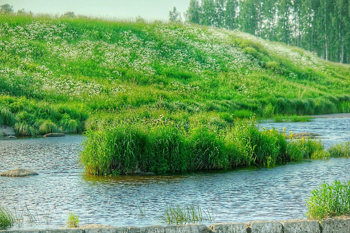 Early Summer Fresh Nature River Nature Finland Summer Fresh And Beautiful Fresh On Eyeem  Nature_collection Water_collection Summer Time  Fields Green Fields Flowers, Nature And Beauty Finlande Finland Nature Beauty Green Nature