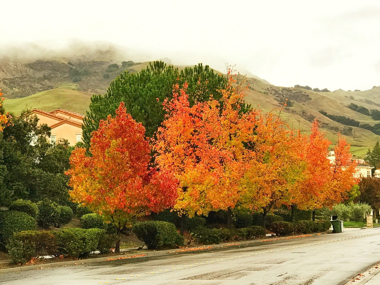 Fall colors in mission hills Fremont California Tree Nature Growth Outdoors Beauty In Nature No People Sky Day Clear Sky Autumn Tranquil Scene Scenics Landscape