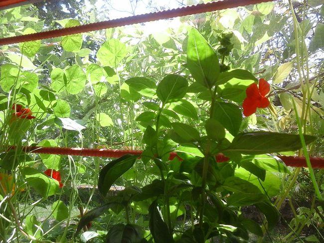 Light And Shadow Verdure Plante