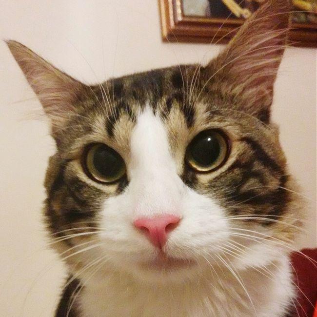 Cat My Lovely