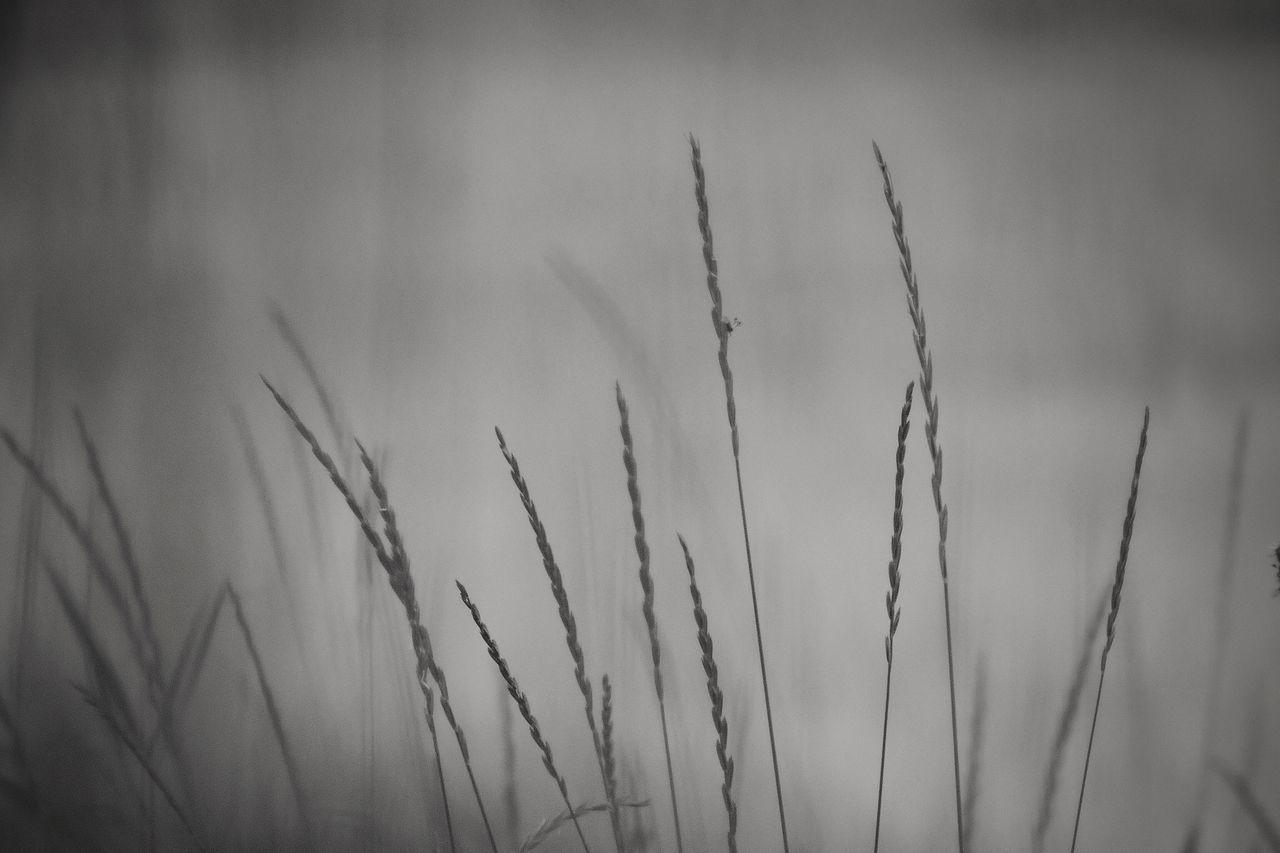 A l o n e Tadaa Community | Bnw | Bw_collection | Eye4black&white  | Eye Em Nature Lover | EyeEm Best Shots - Black + White | Monochrome | Blackandwhite | P510 | Showcase: November