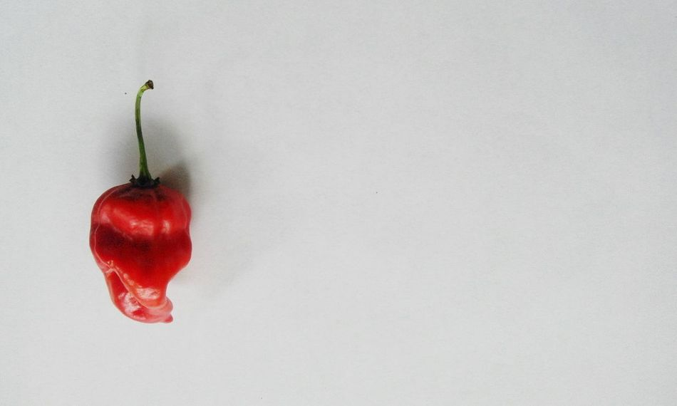 Photography Hot Red Red Chili Pepper White Background Showcase April
